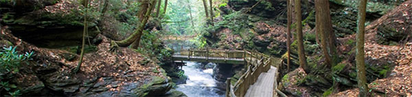a bridge at Bushkill Falls