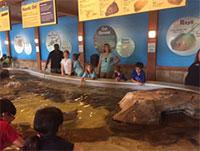 An exhibit at Turtleback Zoo