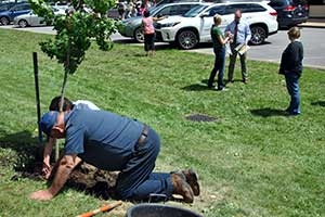 A Buildings & Grounds owrkers helps a forester with the NYS Department of Environmental Conservation plant an oak tree on the lawn along the street side of the middle school.